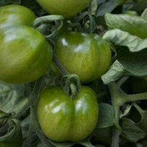 Grants Offered to Further Organic Farming